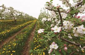 Annapolis Valley Apple Blossom Festival